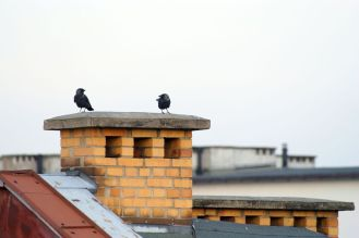 birds sitting on chimney