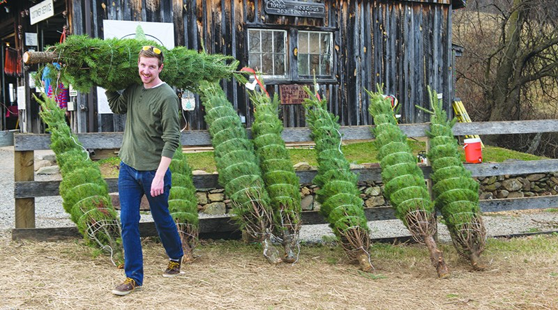 Christmas Tree Pickup Schedule Revised - Loudoun Now