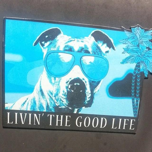 A Dog Lifes