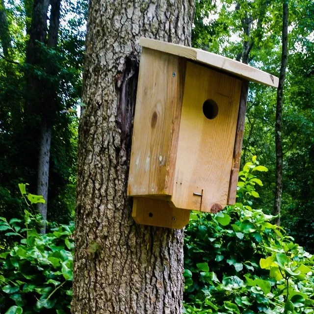 #birdhouse Ive added some additon housing for my feather freinds.