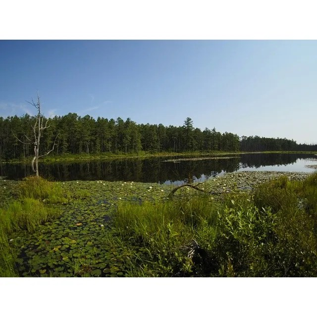 #robertsrun #pinelands #pinebarrens #photography #landscape Beautiful morning from an awesome deep in the pines of nj