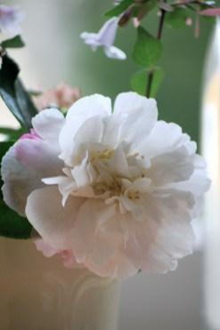 Varuna Flowers