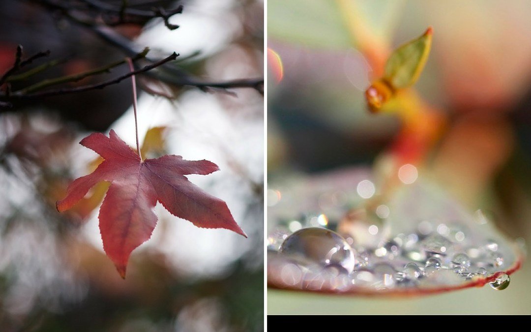 Midweek Moment #44—Winter Leaves