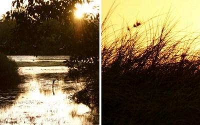 Midweek Moment #55: Golden Sunsets