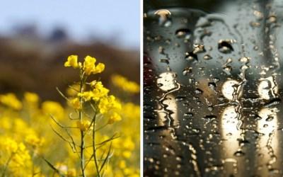 Midweek Moment #54—Rain and Shine