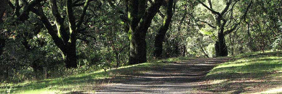 Road Oaks Feature