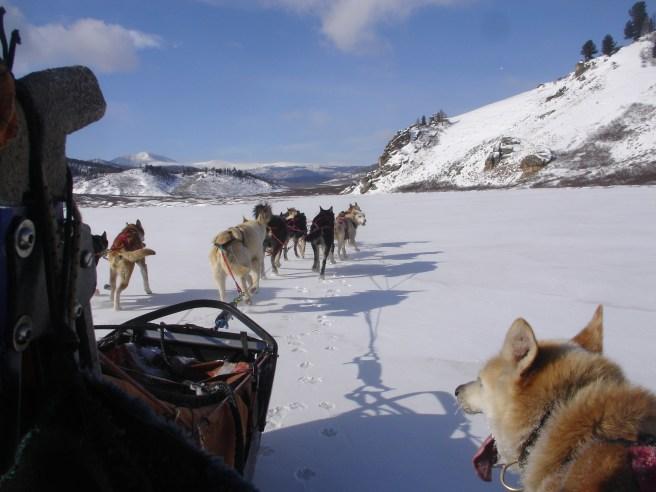 m-dog-sled-1-1