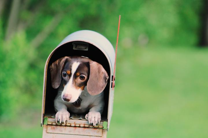 Small dog in a mailbox