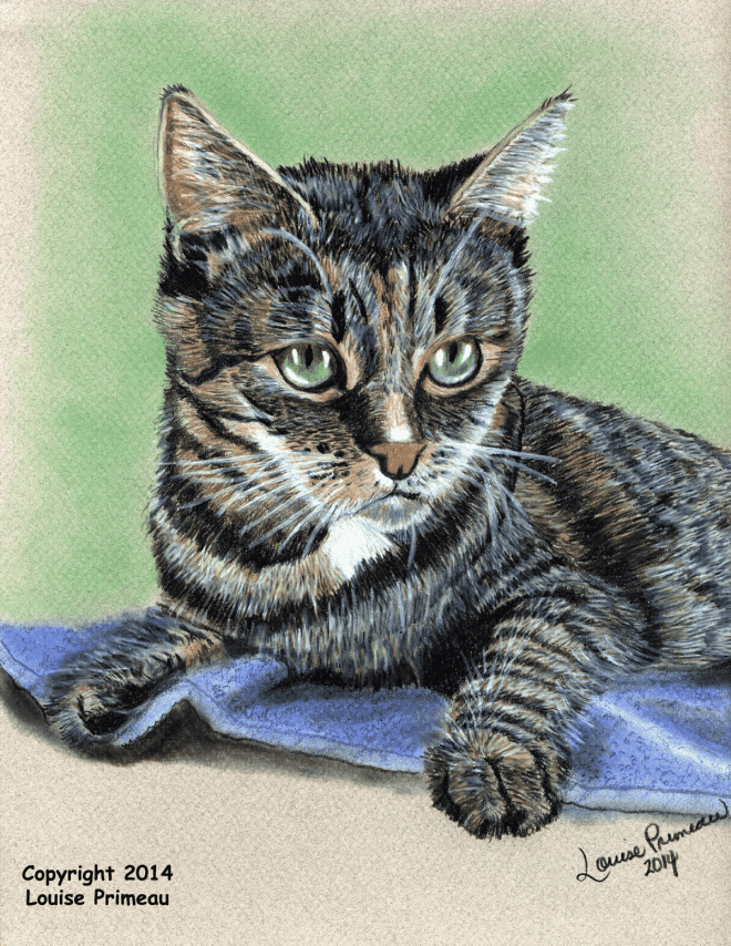 Georgie Pet Cat Portrait