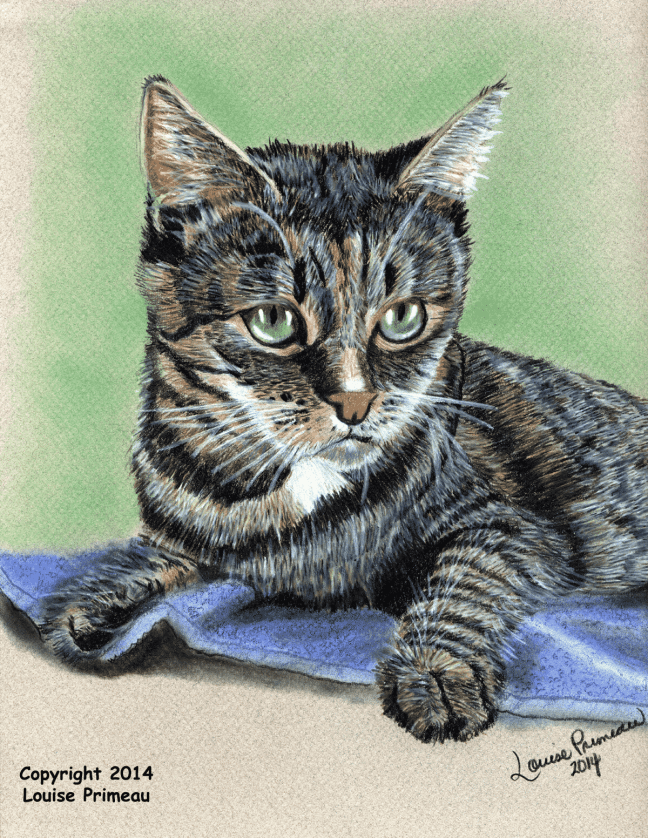 """Georgie"" 9x12"" Prismacolor pencil art on Canson Mi-Teintes Pastel Paper"