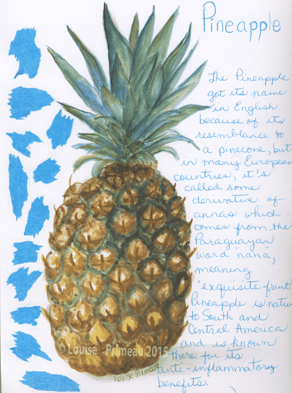 pineapple in sketch book