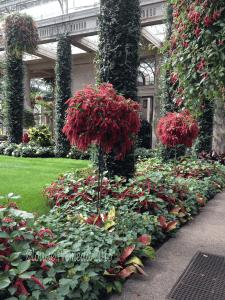 conservatory flowers
