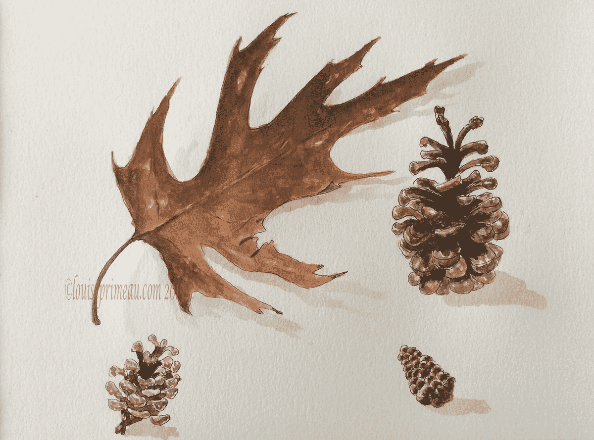 pine cones and dried leaf