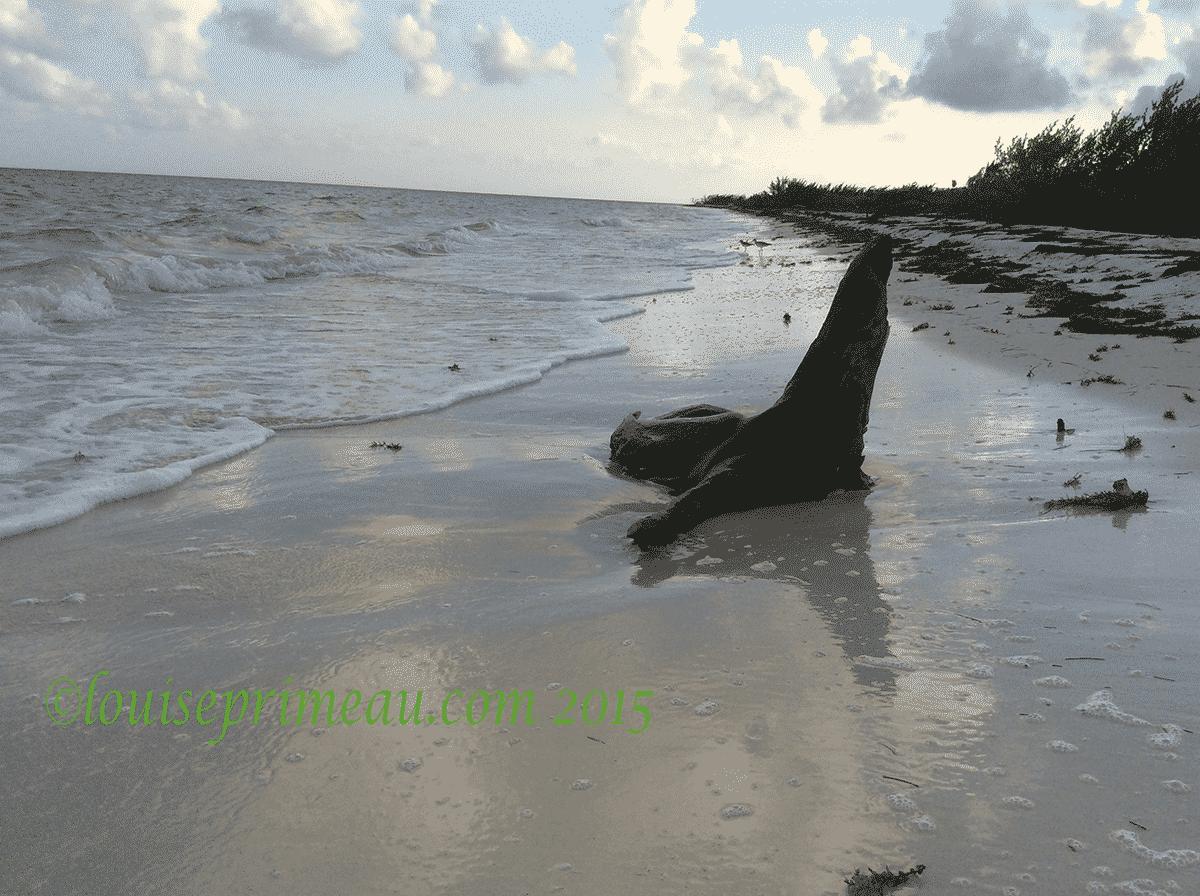 seal driftwood