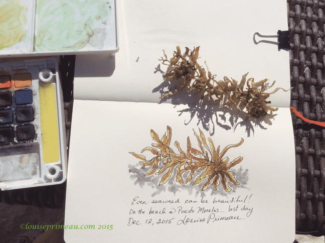 sketch of seaweed