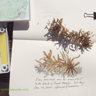Seaweed, beach sketch, Royalton Cancun, 2015.