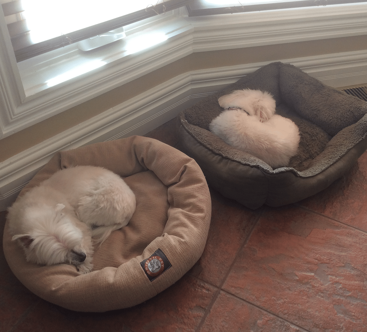 Sophie and Chico (dogs) sleeping in the sun