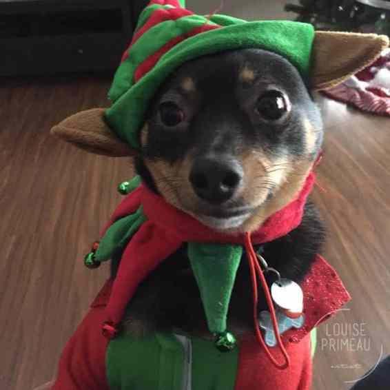 yoda the elf