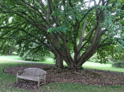 welcoming bench under huge trees at Chanticleer
