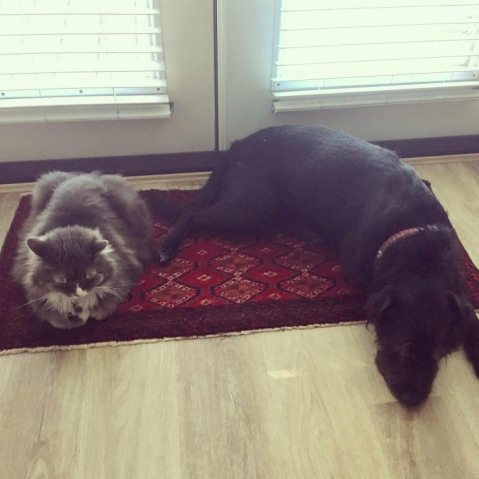 Friends - Reuben and Finn