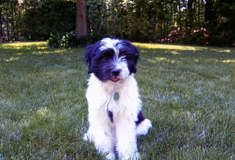 Phlox as a puppy
