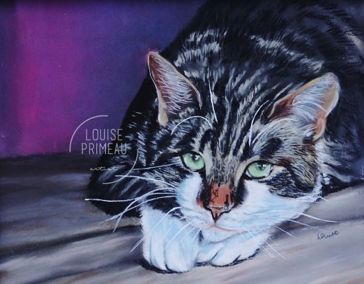 Pastel pet portrait by Louise's ARTiculations