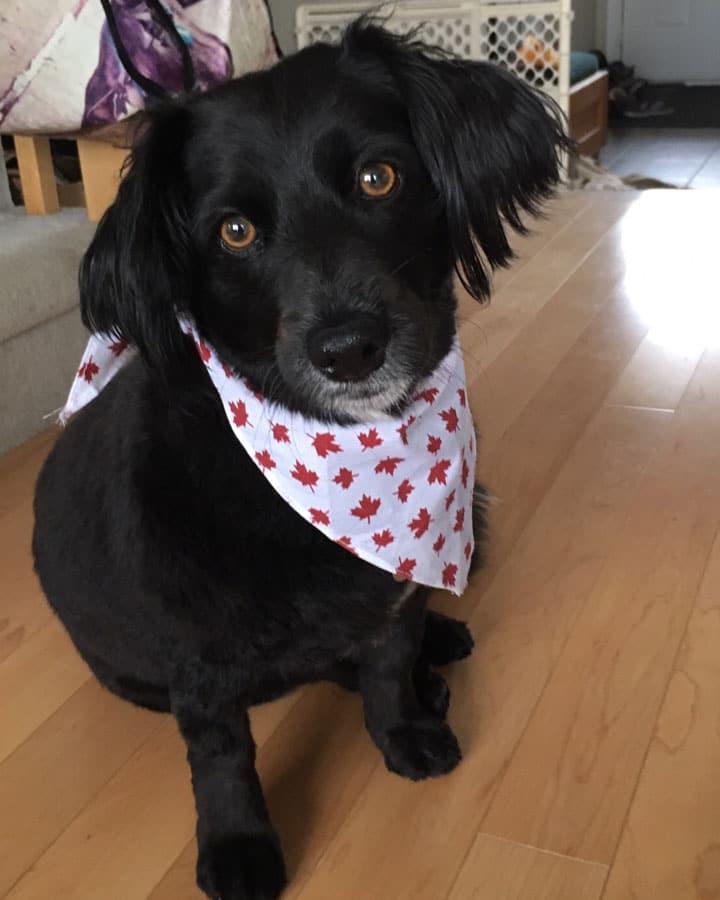 A loving dog