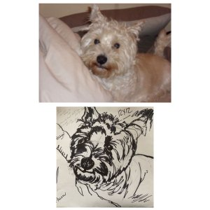 Initial sketch for pet portrait commission