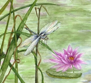 dragonfly-and-water-lily_edited-2-e1301951375644