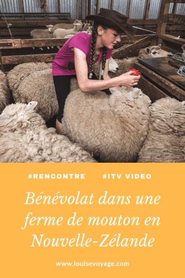 Benevolat_ferme_mouton_nouvelle_zelande(2)