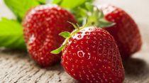 fraises-1_5340487