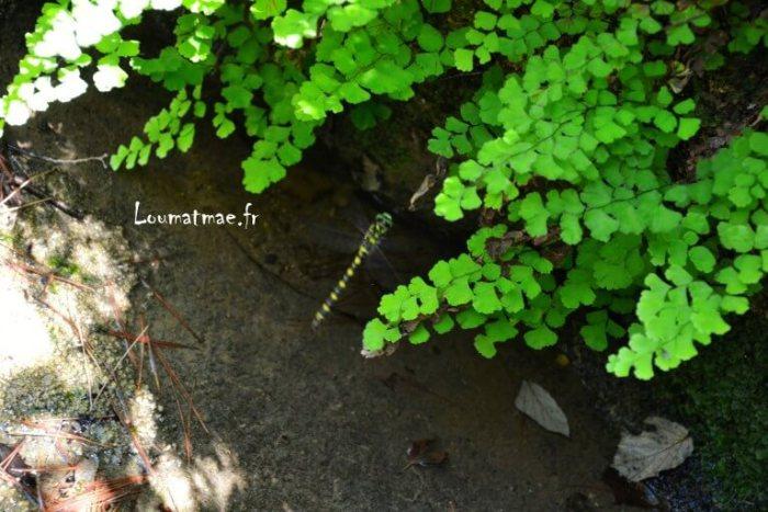 libellule noire et jaune