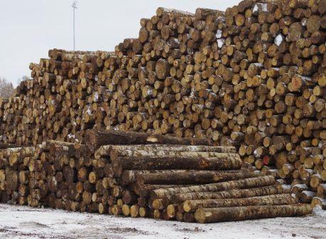 puidurafineerimistehas