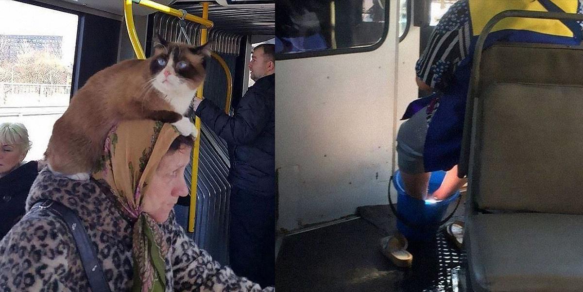 Pildikesi ühistranspordist: ühel naisel on kass peas, teine peseb sõidu ajal jalgu…