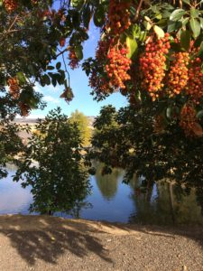 Pond and trees with orange/red berries