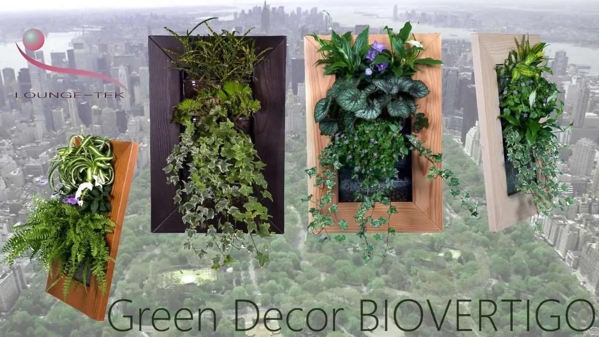 Biovertigo decora le tue pareti con quadri vegetali con fiori e piante vere.