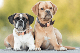Moda dla stylowych psów