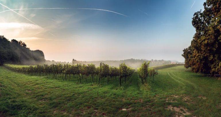 dobre wino WPolsce też może powstać dobre wino [wywiad] 5