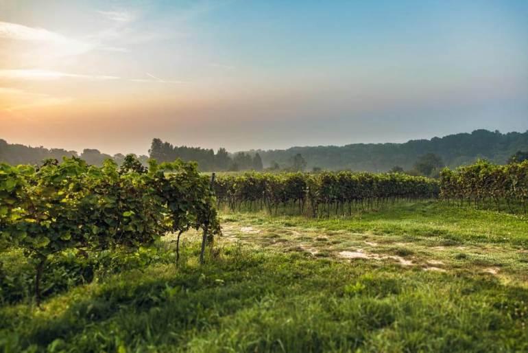dobre wino WPolsce też może powstać dobre wino [wywiad] 4