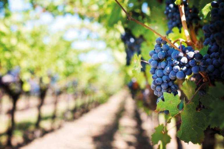 Niezwykłe wydarzenie dla miłośników wina Niezwykłe wydarzenie dla miłośników wina 1