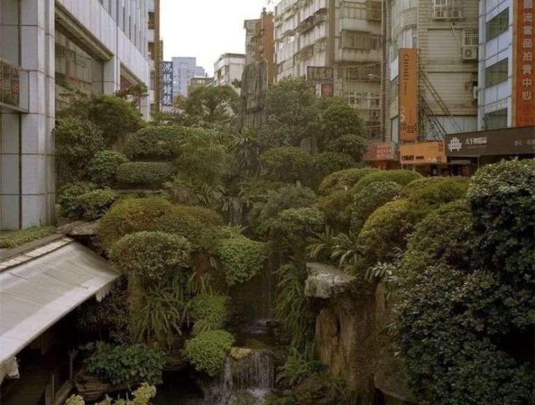 miejska dżungla Jak przeżyć wmiejskiej dżungli - przewodnik zprzymrużeniem oka! 1