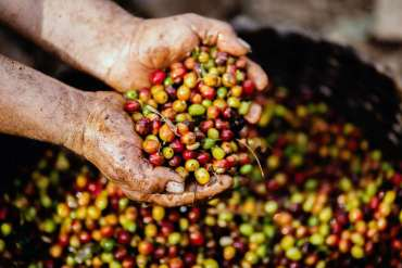 Czyjest kawa eko?