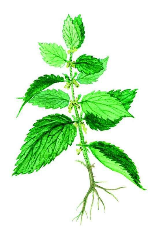 Magiczne zioła irośliny Magiczne zioła irośliny, czyli jak radzić sobie zduchami wkuchni 2