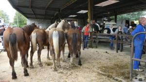 Lourdes : la traditionnelle Foire aux chevaux en déprime