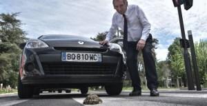 Read more about the article Quand une tortue a décidé de se déconfiner !