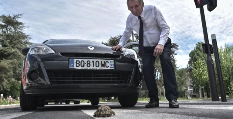 Quand une tortue a décidé de se déconfiner !