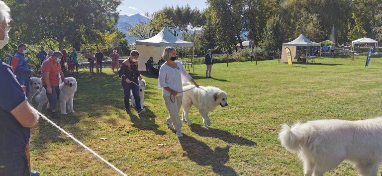 Read more about the article La Fête des chiens des Pyrénées un rendez-vous qui reste très couru