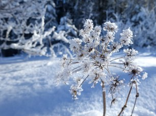 Winter's icy beauty