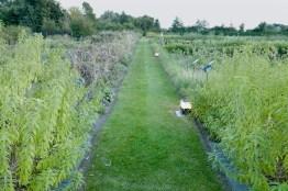 Culinary gardens at Hertog Jan
