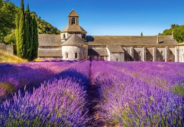 champ-de-lavande-en-provence-france-1000-pieces--puzzle.67081-1.fs.jpg